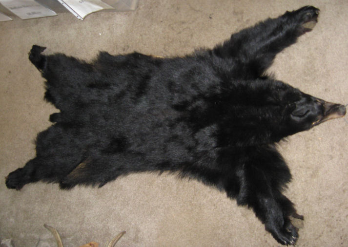 Black bear hide